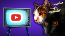 KATZENENTERTAINMENT mit YOUTUBE?